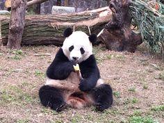 Keeper: Bao Bao enjoying new life in China   WTOP