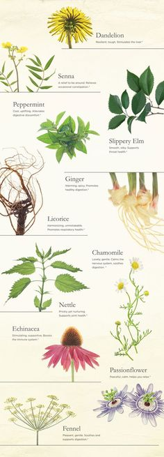 11 Plants for Wellness