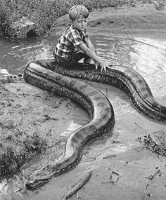 you got to be kidding...this was on google...anaconda,tropical southern south america.