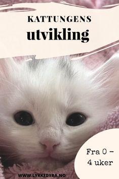 Kattungens utvikling fra 0 til 4 uker. Movies, Movie Posters, Nature, Films, Film Poster, Cinema, Movie, Film, Movie Quotes