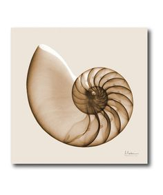 Take a look at this Sepia Nautilus Canvas Wall Art by Beach House: Home Décor on @zulily today!