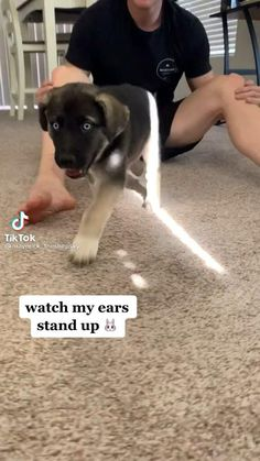 Super Cute Puppies, Cute Baby Dogs, Cute Funny Dogs, Cute Dogs And Puppies, Cute Funny Animals, Baby Animals Pictures, Cute Animal Videos, Cute Animal Pictures, Pretty Animals