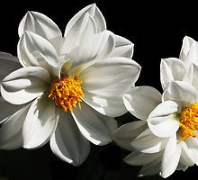 White Flower by elainemarie999