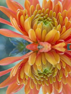 ✯ Orange Mum's Watery Reflection | Picture to Draw