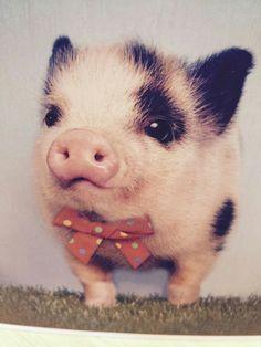 Cute little Piggy going to the ball.
