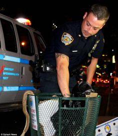 Giant SNAKE found dead in Manhattan trash can Giant Snake, News Us, Mail Online, Manhattan
