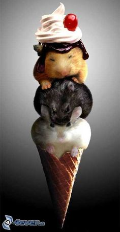 Excuse me waiter? my ice cream seems to be saoft and cuddley. . . .And it seem to be licking the whip cream. . . .
