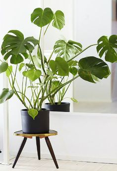 No need to make room on your windowsill for these!