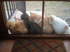 pecking order...only the grey tabby looks annoyed...the gingers are all asleep :o) perfect in The Land of Cat