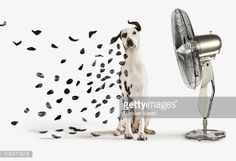 Spots Flying Off Dalmation Dog Stock Photo | Getty Images