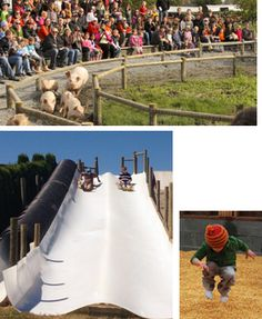 Our three-story hay slide, Live pig races, The corn box, wagon rides, petting fa. Our three-story Outdoor School, Outdoor Life, Fall Festival Activities, Pumpkin Games, Best Pumpkin Patches, Farm Activities, Pumpkin Farm, Corn Maze, Christmas Tree Farm