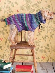 Noro...Seriously, Noro yarn for a dog sweater?  They must love their dog VERY much.