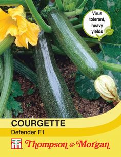 Courgette Defender F1 Hybrid - Blue Diamond Garden Centres