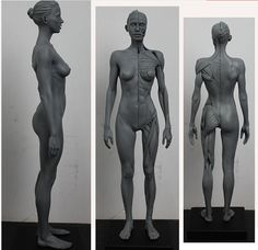 Art reference model female bodies Ideas for 2019 3d Anatomy, Anatomy Study, Anatomy Drawing, Anatomy Reference, Human Anatomy, Human Muscle Anatomy, Art Reference, Female Anatomy Model, Anatomy Models