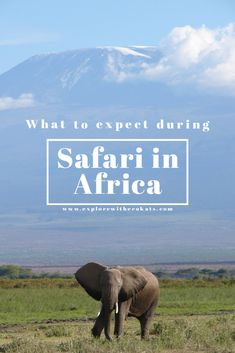 Safari in Africa: What to Expect? - Explore with Ecokats Egypt Travel, Africa Travel, Africa Destinations, Travel Destinations, Sleeping Under The Stars, Morocco Travel, African Safari, Travel Inspiration, Travel Ideas
