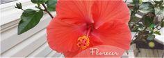 Sue Sveiss: Life: Florecer
