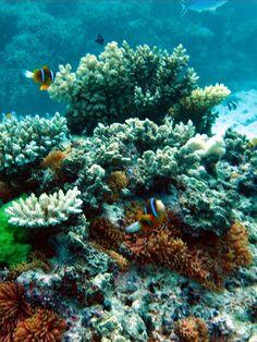 Australia - Great Barrier Reef - Miln Reef - Beatiful reef and fish