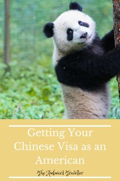 Getting a Chinese Visa as an American Citizen, NOT near an Embassy Chinese Visa, Visit China, Flight And Hotel, Chengdu, Round Trip, Citizen, Beijing, American, Travel Tips