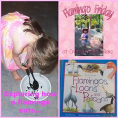 How a Flamingo Beak Works from Crafty Moms Share