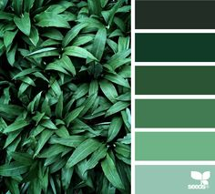 Color Nature - https://www.design-seeds.com/in-nature/nature-made/color-nature-14