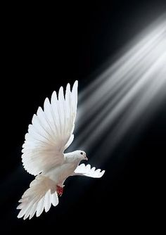 Dove of peace, love, & light to our world...