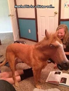 So I put my horse mask on my dog. The girl dying-laughing adds to how hilarious this is! I want a horse mask :D Funny Shit, Funny Cute, Funny Memes, Hilarious, Scary Funny, Funny Stuff, Super Funny, Funny Things, Cute Dog Memes