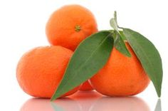 Tangerines may be smaller than oranges, but they are several times higher in vitamins, minerals, and antioxidants such as vitamins C & A, calcium, magnesium & selenium, and beta-carotene & luteins. Tangerines contain anti-viral and anti-cancer properties and are particularly beneficial for colds, fever, flu, arthritis, epstein barr, shingles, constipation, age related macular degeneration, bone repair, neurodegenerative diseases, heart disease, and breast, colon, lung, stomach, ovarian…