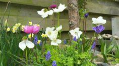 Michels nieuwe blog: update van mijn #stadstuin Blog, Garden, Plants, Garten, Lawn And Garden, Blogging, Gardens, Plant, Gardening