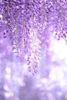 トコハナロジー on in 2020 Violet Aesthetic, Lavender Aesthetic, Aesthetic Colors, Flower Aesthetic, Purple Wallpaper Iphone, Flower Wallpaper, Pastel Purple, Purple Flowers, Flower Backgrounds