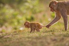 That's a way of controling your child... - Caring Mother Photo by Srinivasa Adiga — National Geographic Your Shot