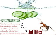 Cucumber is another one among home remedies for ant bites. It will bring you the instant cooling effect and relief from the pain and irritation caused by ant bite. Ant Bites, Insect Bites, Natural Headache Remedies, Natural Home Remedies, Home Remedies For Ants, Home Remedy Teeth Whitening, Bite Relief, Anti Itch Cream, How To Get Rid