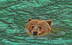 Featured Art - Mama Grizzly going for a Swim by Allen Beatty