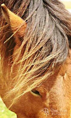 Wild Ponies Assateague Island, MD
