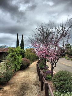 Blossoms! #sandiego #finestcity Blossoms, San Diego, Sidewalk, Country Roads, Spaces, Flowers, Side Walkway, Walkway, Florals