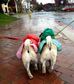 We're Sing'n in the rain !!!!