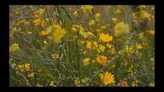 Flower Decorations, Flowers, Plants, Floral Decorations, Floral Headdress, Plant, Royal Icing Flowers, Flower, Florals