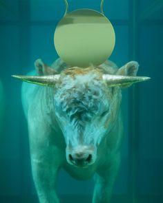 The Golden Calf, 2008.