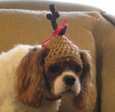 The GRINCHs DOG MAX - Christmas pet hat - Reindeer Humorous - 2 to 20 lb pets. $10.00, via Etsy. SPIKE!!!!