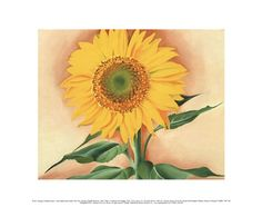 A Sunflower from Maggie, 1937 Georgia O'Keeffe