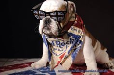 "❤ ""It's only Rock & Roll ... but I like it!"" ❤ Posted on Bulldog & Co. love Forever"
