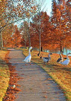 Semmi sem szemet gyönyörködtetőbb, mint csodálatos őszi tájakat és állatokat egy képen látni. Győződj meg róla Te is az alábbi felvételek láttán!
