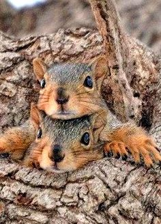 ○ two squirrels