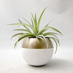 These mini air plant pods are natural pods that have been hand painted and re-purposed into a planter so each pod is unique and organic in