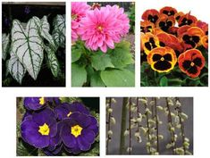 Primula's are a perfect solution to my issue. I have a shady backyard and an obsession with colorful flowers. Stay tuned for updates! Gardening Zones, Gardening Tips, Early Spring Flowers, Spring Sign, Stay Tuned, Colorful Flowers, Amazing Gardens, Outdoor Gardens, Planting Flowers
