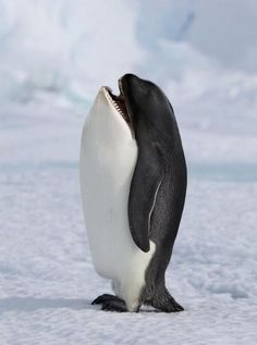 WHATTTTT! :) just wrap ur mind around this. Perfect animal head switch
