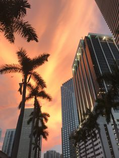 Downtown Miami Sunset in Brickell Miami Sunset, South Beach Miami, Miami Florida, Miami City, Downtown Miami, Hiking Photography, Sunset Photography, Vsco Pictures, Beach Pictures