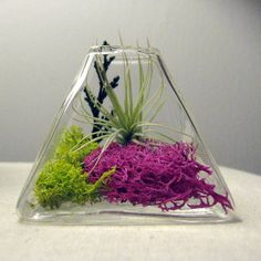 Very cool terrarium with an air plant