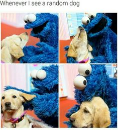 """I saw an adorable pit bull service dog yesterday, it kept looking at me and wagging it's tail I was like """"stop making this painful"""" lol Jiff Pom, Funny Animals, Cute Animals, Animal Funnies, Animal Memes, Baby Face, Funny Memes, Hilarious, Funny Gifs"""