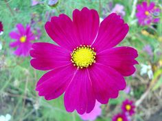 Cosmos-Flowers-21.png (2592×1944)