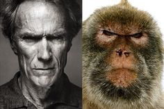 20 Celebrities That Look Like Animals